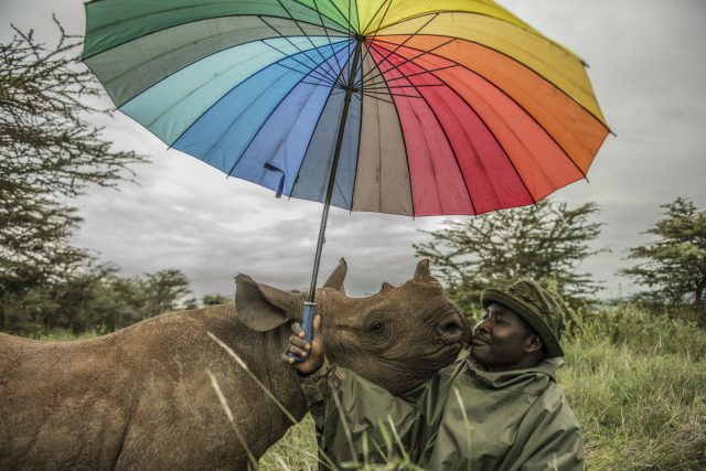 Kenya's Last Rhinos