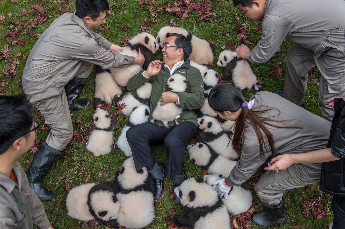 Zhang Hemin papa panda