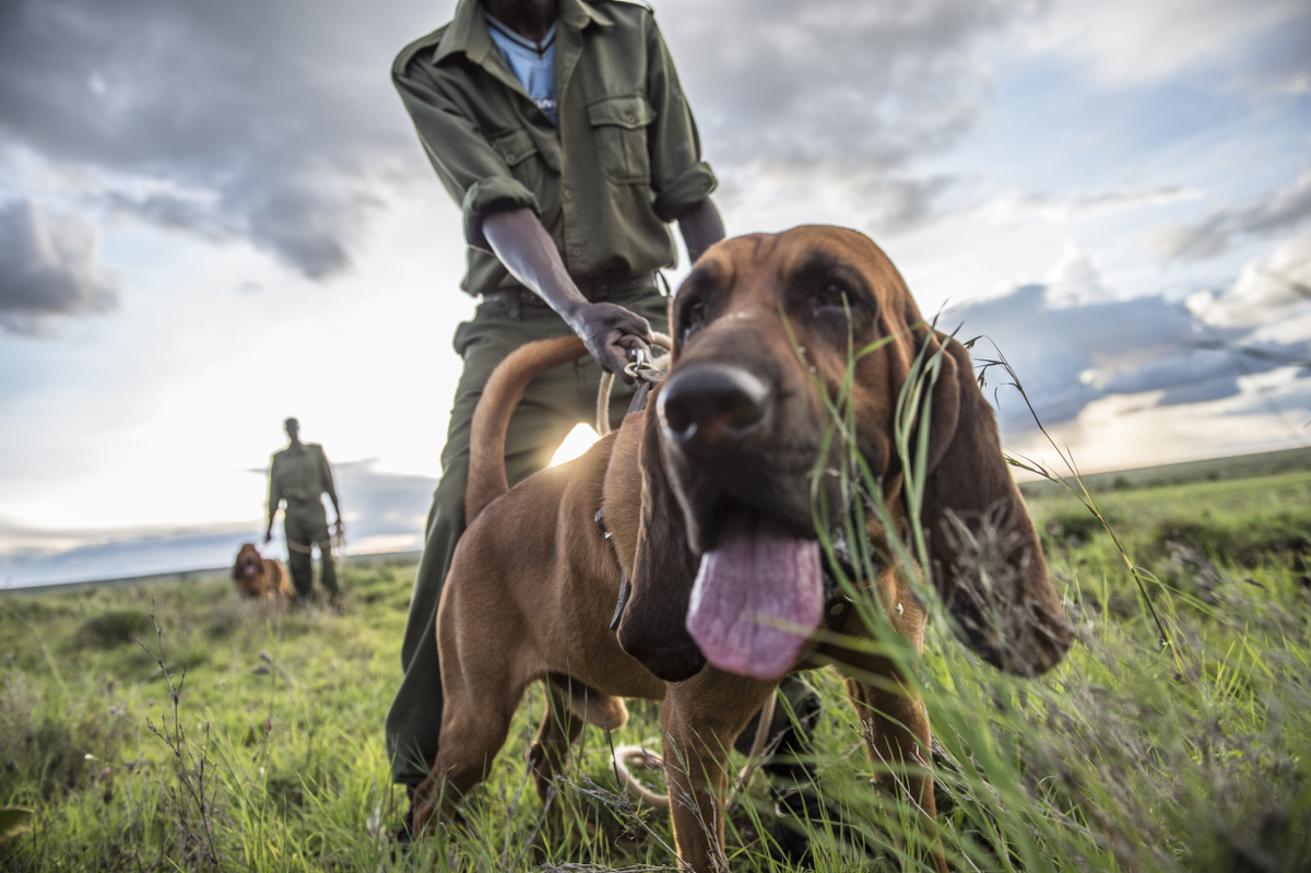 Tracker Dogs Are an Elephant's Best Friend