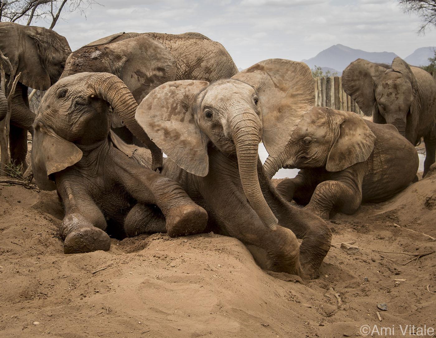 The Flash Print Sale for Reteti Elephant Sanctuary