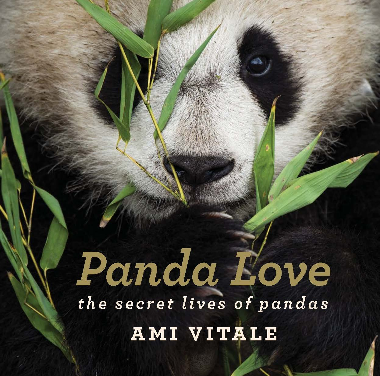 Panda Love: The Secret Lives of Pandas – A New Book from Ami Vitale