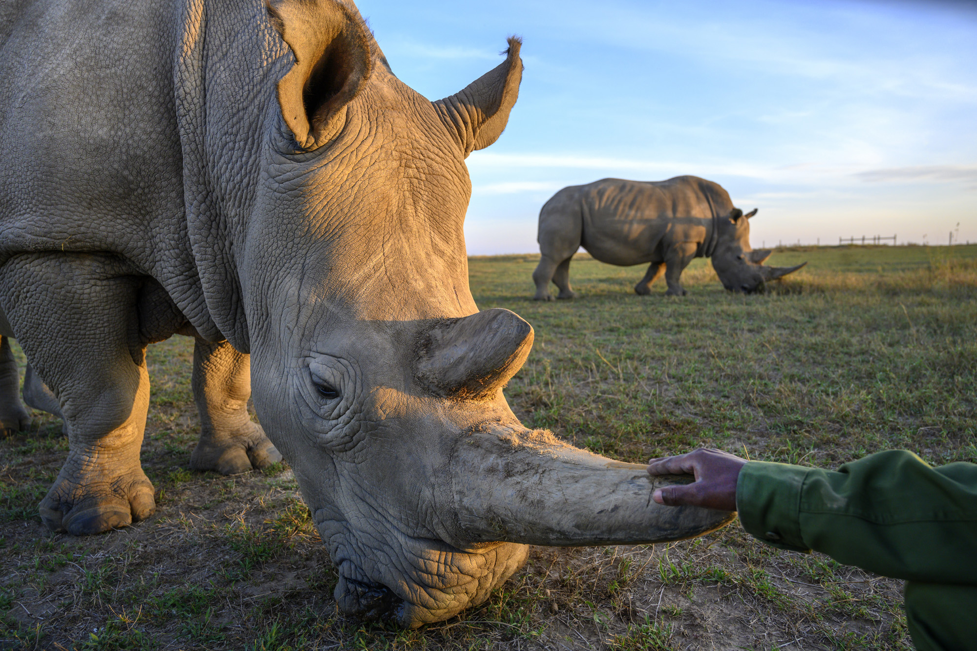 Flash Print Sale to Support Northern White Rhino Keepers